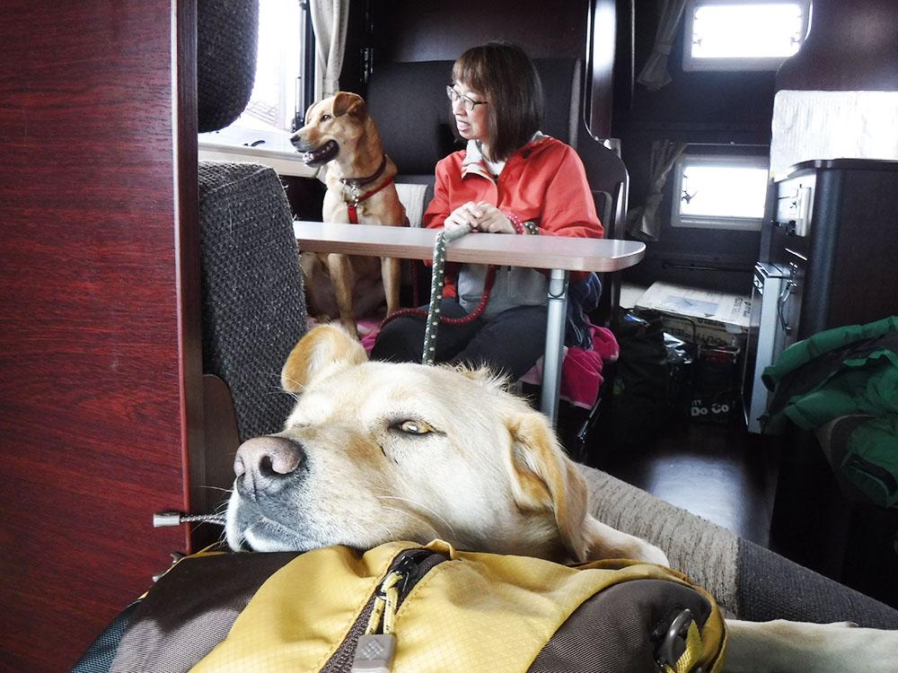広々車内で犬もゆったり過ごせます。