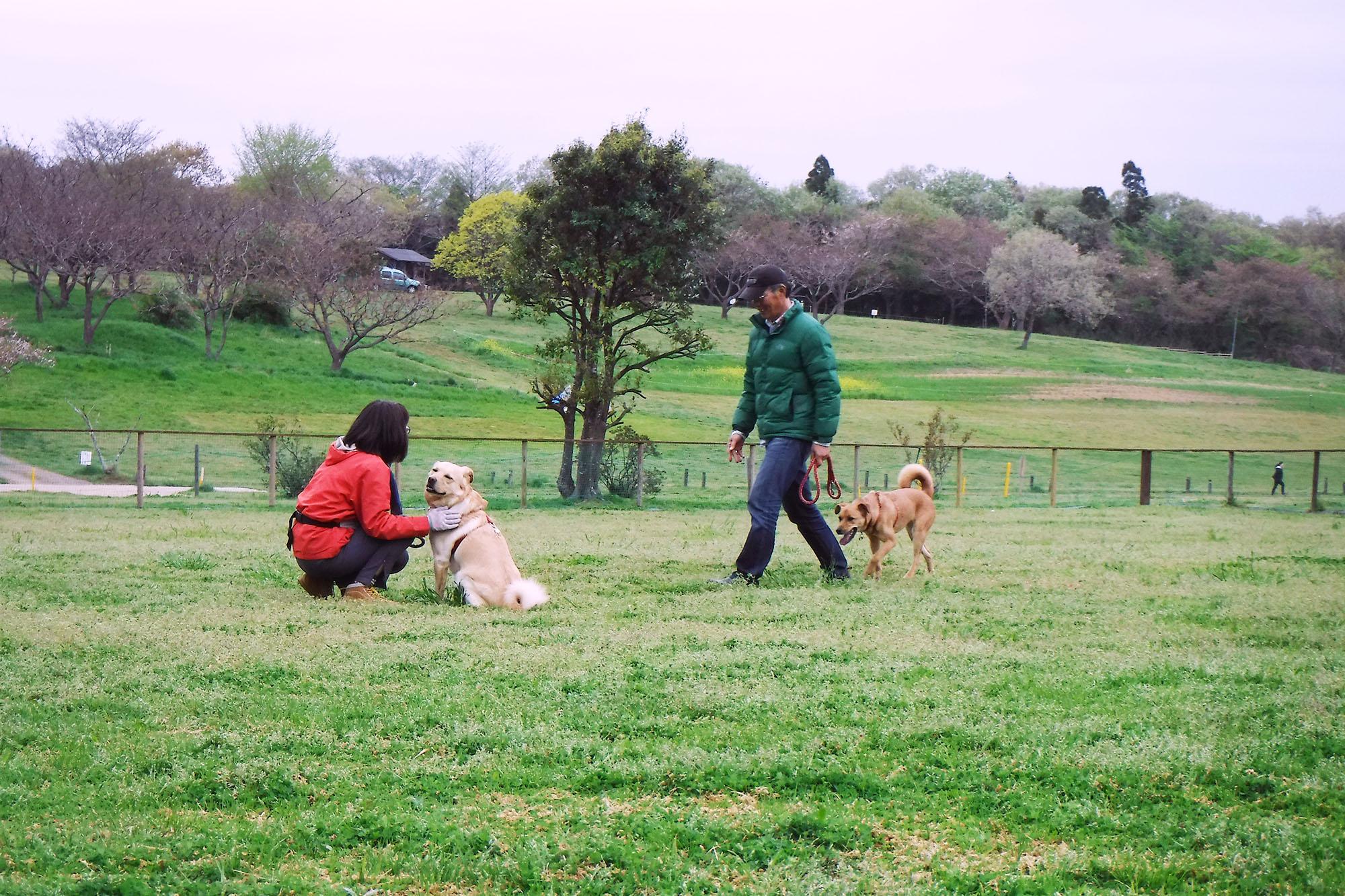 自然の中で人も犬ものびのび!